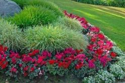 List of Low Maintenance Plants- I need low maintenance everything!: Landscaping Outdoor, Outdoor Garden, Low Maintenance Flower Bed, Gardening Landscape, Low Maintenance Plants, Gardening Outdoor, Front Flower Bed