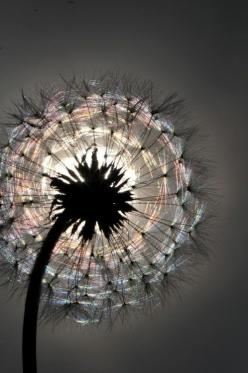 Live in the present without regretting the past or fearing the future: Picture, Photos, Nature, Art, Beautiful, Flowers, Dandelions, Photography