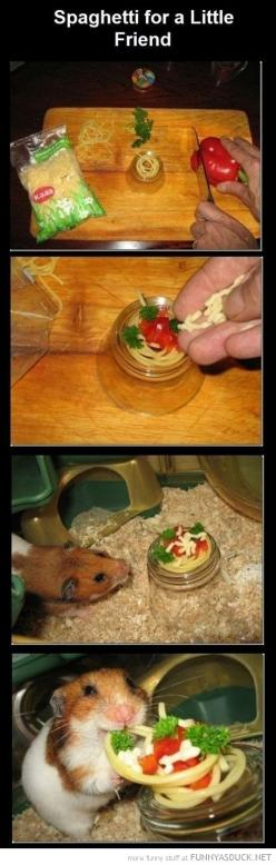 Look at his happy little face!: Hamster Spaghetti, Animals, Friends, Stuff, Pets, So Happy, Hamsters, Funny, Things