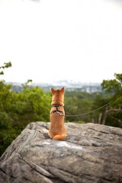 look out there: Shiba Inu, Beautiful Animals, Wild Animals, Cute Pets, Baby Dogs, Beautiful Pets