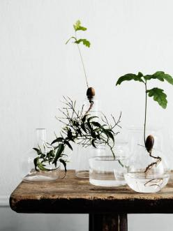 lottaagaton_4: House Plants, Interior, Ideas, Green, Glass Vase, Garden, Flower, Fight Agaton, Indoor Plants
