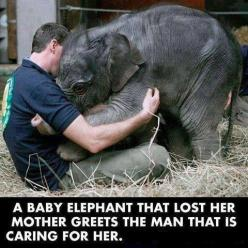 Love is a universal language,This picture is absolutely precious!  <3: Babyelephants, Babies, Animals, Sweet, Baby Elephants, Creature, Things, Friend