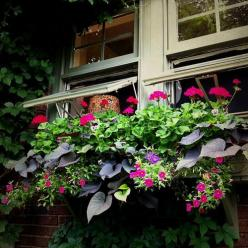 Love the color from the flowers in the window box!!: Container Gardens, Kitchen Window, Photo Sharing, Window Garden, Windows, Flower, Container Gardening, Window Boxes
