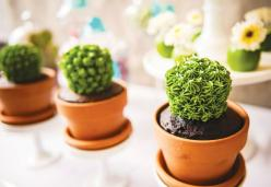 Love these cactus cupcakes!! How about a big cake that looks like many different cactus/succulents?: Fiesta Cactus Cupcakes, Cactus Cakes, Fiesta Cupcakes, 50S Cupcakes, Cupcakes Choc, Mexican Party, Cactus Cupcakes Adorable, Mexican Fiesta, Cactus Cupcak