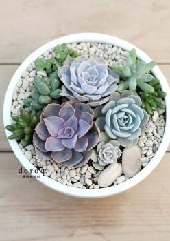 LOVE THIS -Shades of blue - We think Succulents are absolutely beautiful and make great house plants. They are easy to look after and make you feel great! Why not pop a few around your house...: Succulent Bowl, Nautical Bathroom, Indoor Succulent, Delicio