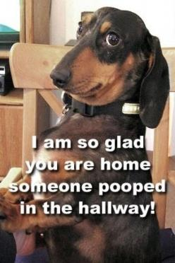 love this! (this reminded me of my Jamie Lee! Haha!! Back in my high school & college days- she always gave me that kinda of look every time I came home!! How you cannot punish that dog with that 'I can get away with it by that look'!? Lol!!