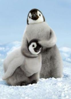 Lovely...: Animals, Noogie Time, Happy Feet, Penguin Noogies, Penguin, Adorable, Knuckle Head, Baby Penguins, Birds
