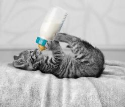 Lovely-KittyCats, theguccislut: And something innocent to follow...: Cats, Babies, Animals, Kitty Cat, Sweet, Pets, Adorable, Kittens, Baby Bottle