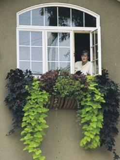 lovely...two different sweet potato vines, my go to plant for containers: Idea, Hayrack Planter, Sweet Potato Vines, Outdoor, Plants, Window Planters, Windows, Garden, Window Boxes