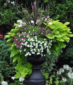 Lush planter. Cordyline for the foundation (I would also consider using purple fountain grass) surrounded by potato vine and calibrachoa for the trailing greenery and flowers.: Garden Planters, Sweet Potato Vine, Lush Planter, Plants Pots Gardening, Sweet