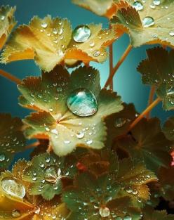 #Macro Photo of Flower Leaves - Nice!, Stellar Share!  Keep up the stellar Macro work.  Pin, repin, share. http://slrmacrolens-q2.info: Drops Macro, Beautiful Leaves, Sweets Waterdrops Naturel, Rain Dew Drops, Dewdrops, Waterdrops Photography, Beautiful N