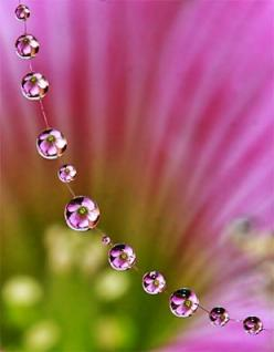 Macro photography - flowers in water droplets....looks like a flower necklace!: Macro Nature Photography, Water Drops, Waterdrop, Dewdrops, Raindrops, Dew Drops, Rain Drops, Water Droplets, Flower