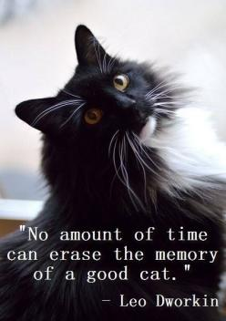 Maddox, Negrito I will  love you forever. (I miss you, guys!)  My dearest cats: Beautiful Quote, Cat Quotes, Animal Quotes Love, Animal Love Quotes, Love For Animals Quotes, Cat Lady Quotes, Kitty, Cats Quotes Love, Love Animals Quotes