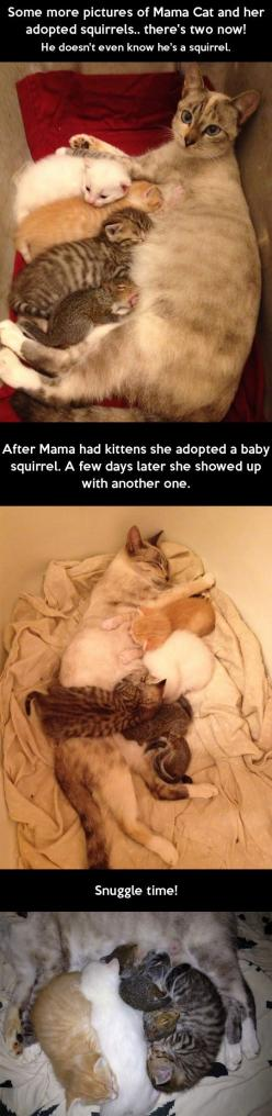 Mama Cat and her adopted squirrels // funny pictures - funny photos - funny images - funny pics - funny quotes - #lol #humor #funnypictures: Cats, Sweet, Adopted Squirrels, Baby Squirrels, Cat Adopts, Adopts Squirrel, Mama Cat, Kitty, Animal