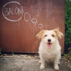 Meet Ginny, the happiest dog on the Internet How a dog once abandoned on the side of the road was rescued and rehabilitated to become a sass...: Chalk Photo Ideas, Dogs Photography Ideas, Pet Photography Ideas, Animal Photography Dogs, Dogs Pets, Dog Phot