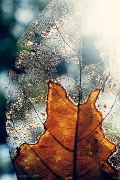 Millions of people have decided to live at the minimum out of the simple fear that from the maximum you can fall. --Osho: Inspiration, Texture, Natural Structure, Leaf Skeleton, Nature S, Leaves, Close Up, Photo