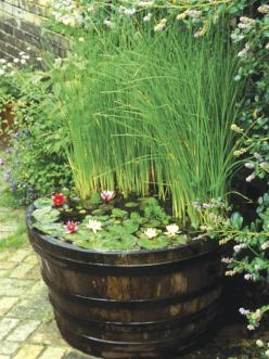 Mini Oasis  If space is limited, a small fountain, bubbling millstone or half-barrel or trough filled with water and aquatic plants can be a good option. Place your feature by a seat or close to the house where it will be visible from the window.    When