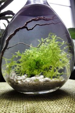 Moss water terrarium - this is beautiful NEVER THOUGHT OF A WATER TERRARIUM!!! ENDLESS POSSIBILITIES!!!!: Colour, Aquarium Terrariums, Water Terrarium, Mossy Terrarium, Moss Water, Bonsai Moss Terrariums, Water Garden, Moss Garden