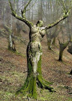 MOTHER NATURE, PORTUGAL, Real WoWz: Mothernature, Beautiful, Art, Trees, Things, Mother Nature, Garden, Photo