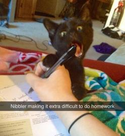 My cat does this all the time: Cute Cats, Silly Cats, Bad Kitty, Pens And Pencils, Cats Weed, Cats Dogies, Black Kittens, Darn Cats, Cat Names