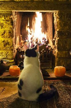 Never seen fire before by Anthony. Vaughan, via Flickr ~ Two of my favorite things, a roaring fireplace and a cute cat!: Cats, Animals, Winter, Warm, Autumn, Fireplaces, Pet, Chat, Kitty