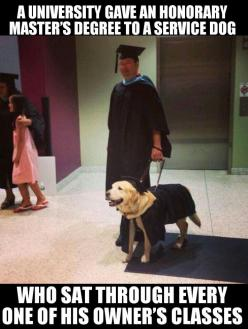 Nice to see the dog recognized. I think this is just fabulous: Sweet, Master'S Degree, Service Dogs, Servicedogs, Animal