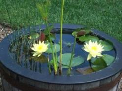 No matter what container you choose, make sure it is about 1.5 feet deep and measures at least 18 inches across. In order to maintain healthy plants, your container water garden should hold 5 gallons of water.: Garden Container, Garden Ideas, Container Wa