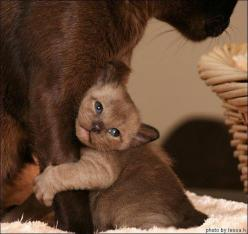Nooooo, don't leave me!!!!: Cats, Animals, Love You, Sweet, Kittens, Leave Me, Kitty, Mom