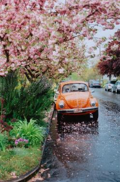 Not only is a great pic - but stand alone - love the tree (dogwood????) and everyone knows the vehicle is the car of my dreams!  Thanks for sharing Fernanda and giving me a great visual.: Orange, Color, Cars, Things, Spring, Photo