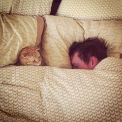 Not sure if there's a planned sabotage or kitty is just enjoying an under cover adventure. LOL: Cats, Snuggle, Bed, Pet, Mans Best Friend, Kittens, Feline, Cat Lovers, Animal