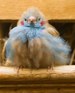 Not sure what kind of bird this is -- a tropical one, i'd guess -- but dont'cha just love the blue plumage, pink beak and expression on its' face: Birds Birds, Animals, Weight Loss, Lose Weight, Morning Coffee, Beautiful Birds