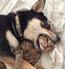 Nothing Going On Here, Just Friends: Cats, Animals, Dogs, Best Friends, Stuff, Pets, Funny Animal, Photo