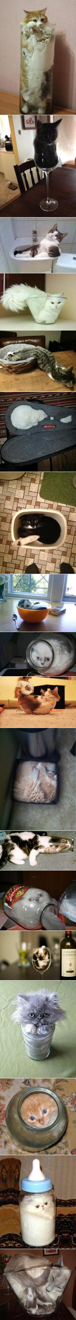 Obviously cats are not claustrophobic.: Kitty Cats, Funny Cats, Container, Proof Cats, Crazy Cat, Liquid Cats, Animal, Cat Lady
