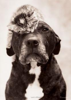 OH MY PRECIOUS. This is so my dog and cat. There obsessed with eachother, Baloo and Brody <3: Cats, Kitten, Animals, Dogs, Eye Patch, Pitbull, Pets, Pit Bull, Friend
