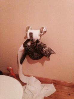 Oh yah...hi....ummmm...not really doin much of anythin...just kinda hangin out: Cats, Animals, Kitten, Funny Cat, Funny Picture, Crazy Cat, Kitty, Toilet Paper
