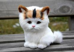 OMG! Adorable white kitten   is it real: Cats, Animals, Kitty Cat, Pets, Funny, Adorable Kitten, Things, Dog, Cute Kittens