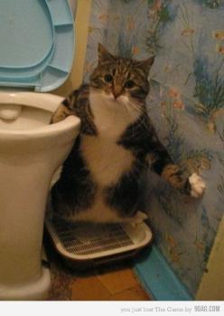 omg, lol, Check out the #cat's expression, priceless: Funny Animals, Funny Cats, Pet, Funny Stuff, Funnies, Humor, Kitty