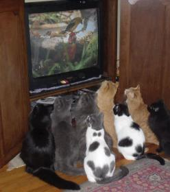 One its funny because all the cats are looking at a bird on the TV. Two its funny because some one has that many cats.: Cats, Animals, Funny Cat, Crazy Cat, Funnies, Funny Animal, Kitty