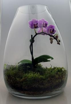Orchid terrarium - maybe my orchid would like this better than sitting on the kitchen windowsill.: Purple Orchid, Kitchen Windowsill, Ideas Para, Ideas Hacer Terrarios 18, Greenery Nyc, Pretty Flower, Plants Gardening, Orchid Terrarium Ideas