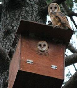 Owl Boxes: Create a home for the owl. A family of barn owls can eat up to 3,000 rodents in a four-month period. All, without chemicals. Here's how to attract more to your area...: Home Garden, 3 000 Rodents, Four Month Period, Birdhouse, Owl Boxes, Ow