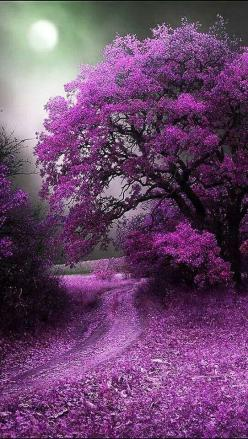 PATHWAYS:  violet pathway beckons ... Beautiful flowering tree: Purple Trees, Nature, Purple Passion, Beautiful Purple, Things Purple, Color Purple, Places, Flower