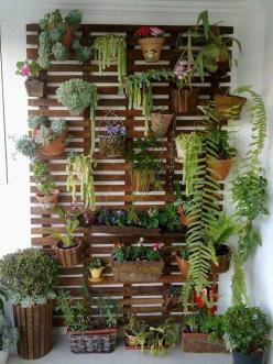 Perfect for small patio, wall of potted plants.: Plant, Jardim Vertical, Living Wall, Vertical Gardens, Garden, Wall Gardens