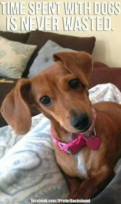 Perry's Resort White Caps Cottages and Motel rooms are Pet Friendly! Max weight limit is 35 lbs. There is a pet fee of $10 per day per pet, and you can have up to 2 pets! #DaytonaBeach #Petfriendly: Daschund, Dogs, Dachshund, Pet, Weenie, Doxies, Pupp