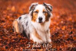 Pet Photography Tips: Get Your Dog to Look at the Camera   Pretty Fluffy: Dogs, Pet Photography Tips, Photography Pet, Pet Photography Ideas, Pets, Dog Photography Idea, Dog Photography Tips, Cameras, Aussie