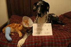 Pet shaming: Animals, Cat, Dog Shaming, Funny, Poor Kitty, Pet Shaming