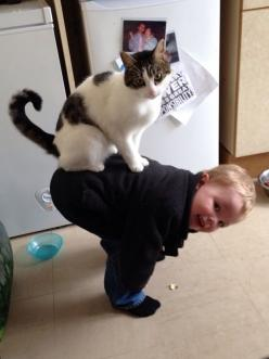 #PETS#They have a different way of playing.   38 Pictures That Prove Cats Have Hearts Of Gold: Cats, Animals, Pets, Funny, Pictures, Children, Kids, Kitty, Friend