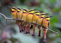 photos of birds   ... bee-eater pictures: one of the best bird pictures in a new contest: Photos, Animals, Bees, Nature, Beautiful Birds, Photography