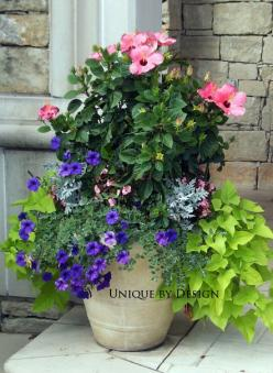 Pink Spring - Here are three things I love together, pink hibiscus paired with purple wave petunias and chartreuse potato vine... it's a charmer.: Container Gardens, Potted Plants, Flower Pot, Plants Gardens Landscapes, Garden Flowers Plants, Containe