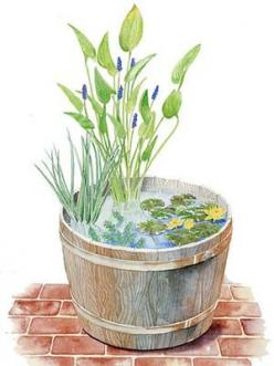Plans for a Whiskey Barrel Water Garden by Ruth Rogers Clausen, countryliving. #Water_Garden #countryliving #Ruth_Rogers_Clausen: Garden Container, Water Gardens, Water Features, Whiskey Barrels, Whiskey Barrel Water, Watergarden, Small Garden