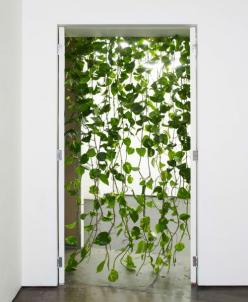 Plant curtain.: Ideas, Curtains, Green Curtain, Plants, Garden